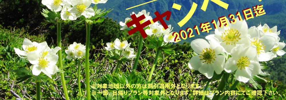 野口観光 Go to トラベルキャンペーン